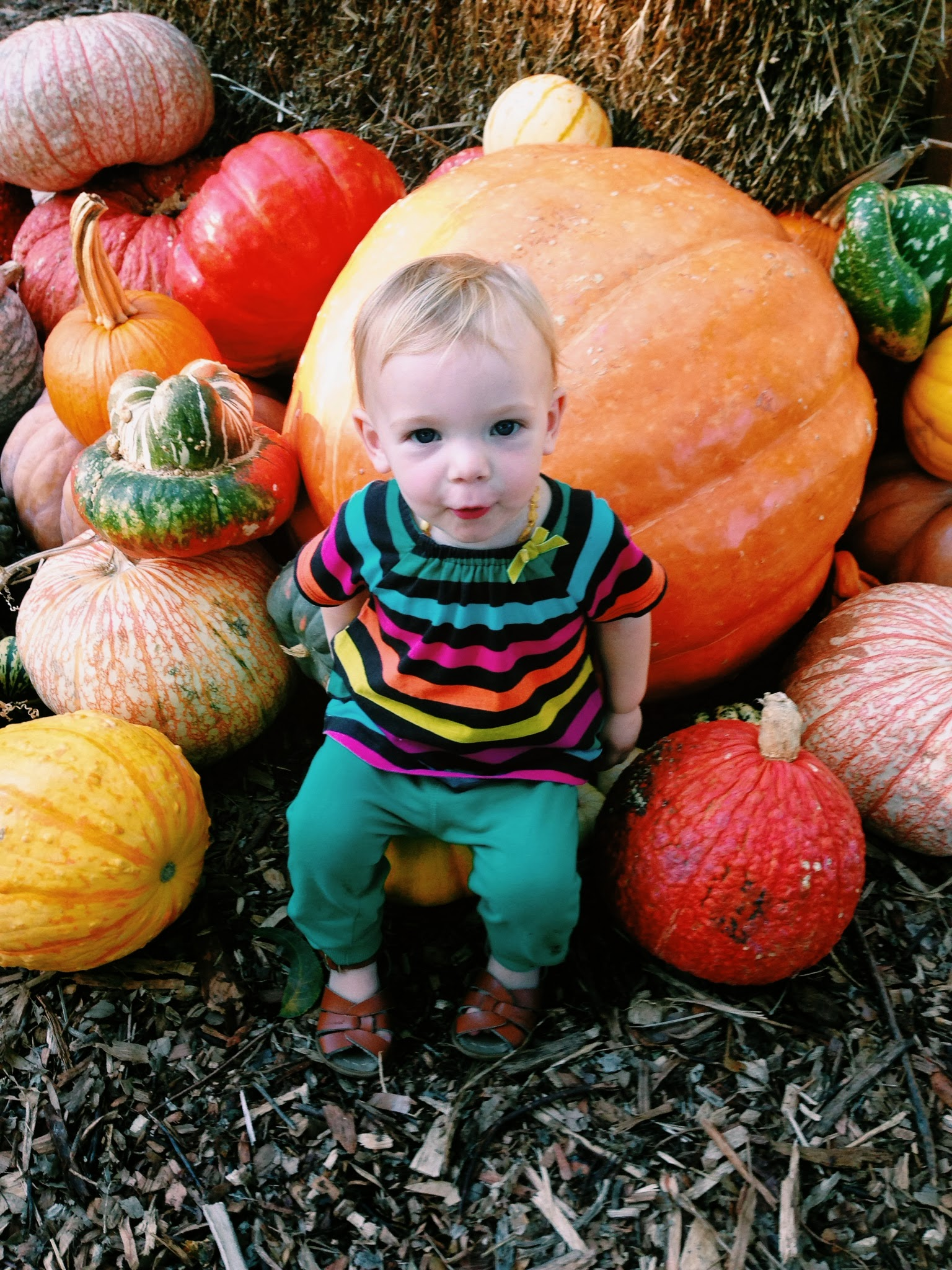 Pumpkin Village at the Dallas Arboretum - Sept 2013